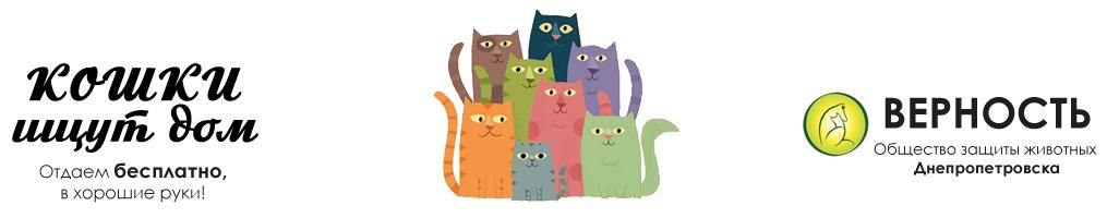 Верность | Кошки ищут дом