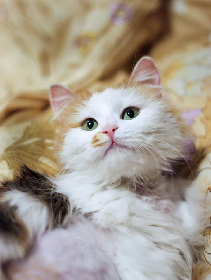 Красавица-кошка осталась на улице...