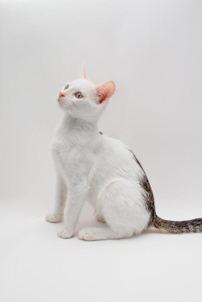 Котёнок Лунтик ждёт хозяйку