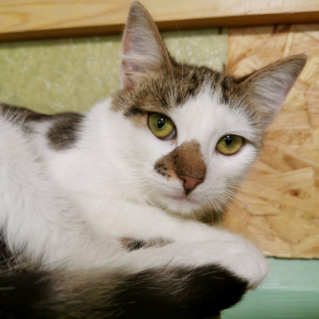 Каспер, просто добрый ласковый котик