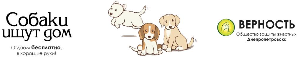Собаки ищут дом | Верность
