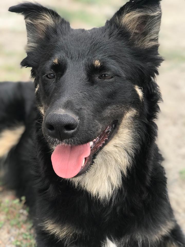 Шайба, кучерявая красотка