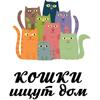База данных кошек