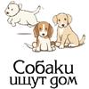 База данных собак