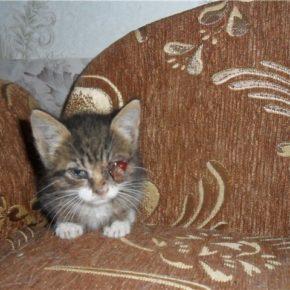 Котенок-девочка, несколько недель,