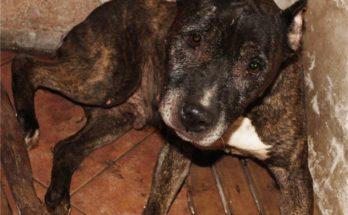 Потерялась собака Днепропетровск