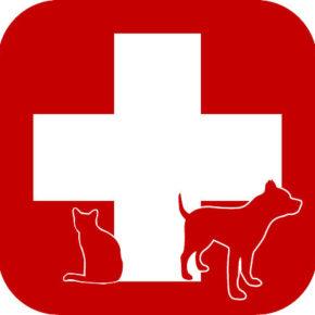 Животные, нуждающиеся в срочной помощи