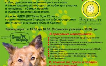 выставка беспородных собак