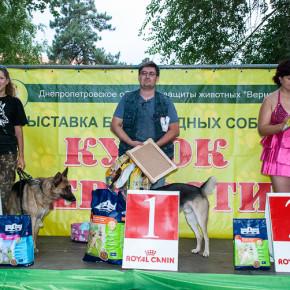 Победители Кубка Верности 2013