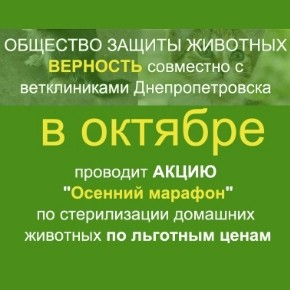 """Акция по стерилизации домашних """"Осенний марафон"""" 2013"""