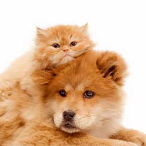 Стерилизация и кастрация животных. Что Вы должны знать?