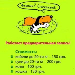 Льготная стерилизация домашних животных в апреле