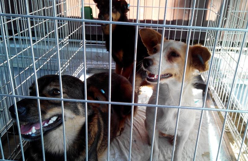 стерилизация собак Днепропетровск