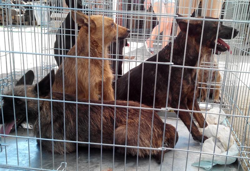 Акция стерилизация животных Днепропетровск
