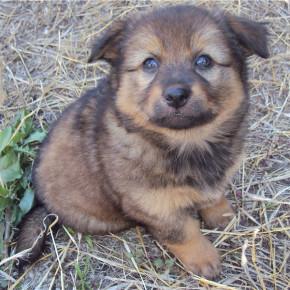 Хотите взять щенка бесплатно? Возьмите его у нас!