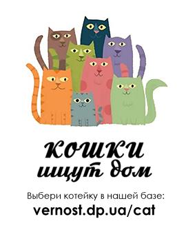 button_cat_3