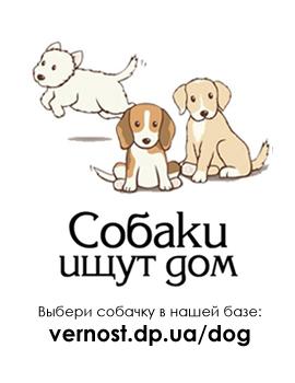 button_dog_2