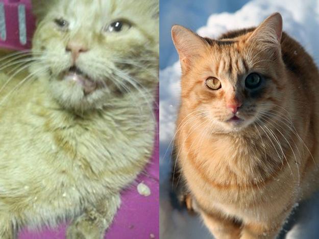 Спасенные животные Украина: кошка Ириска