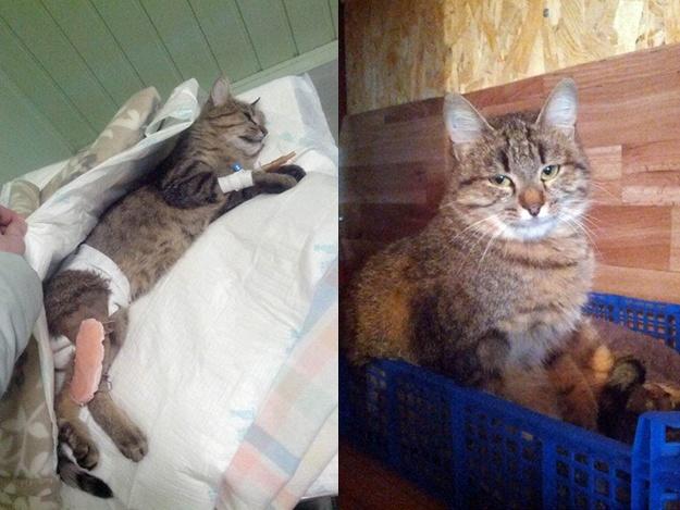 Спасенные животные Украина: КОШКА ЛИНУКС