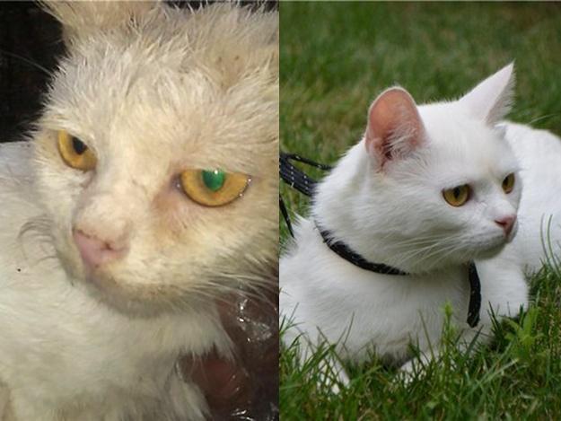 Спасенные животные Украина: кот Альбус