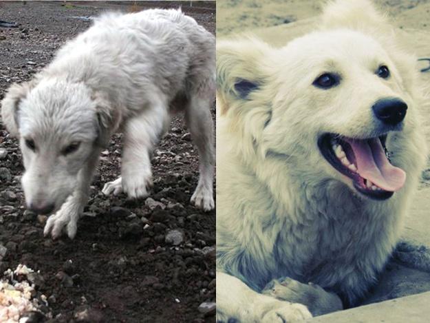Спасенные животные Украина: собака Белка
