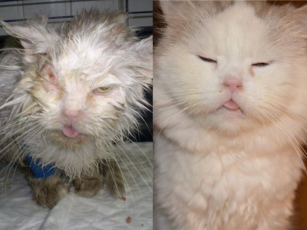 Спасенные животные Украина: кошка Белка