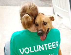 Быть волонтером просто!