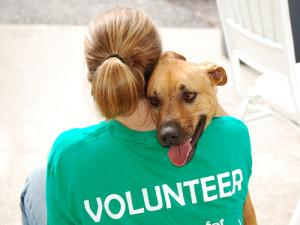 Помочь животным Украина. Волонтеры Днепропетровска