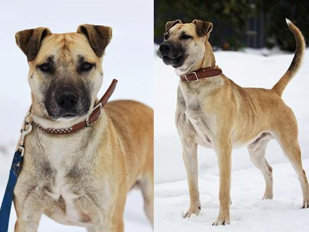 Спасенные животные Украина: пес Роб