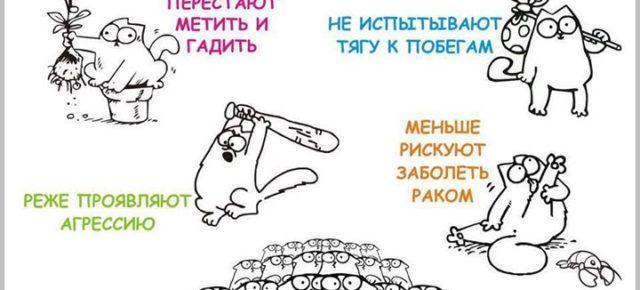 """Акция по стерилизации ДОМАШНИХ животных """"Осенний марафон 2017"""" от ДГООЗЖ Верность"""