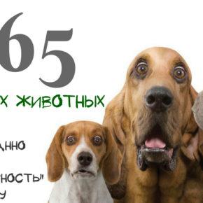 Итоги акции по стерилизации домашних животных!
