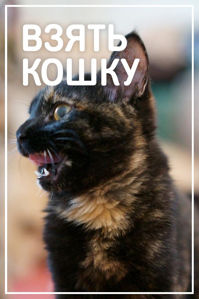 Взять кошку бесплатно в Днепре